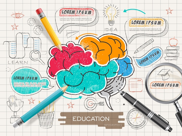 Conception de modèle infographique de l'éducation avec cerveau coloré dans un style doodle