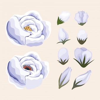 Conception de peinture de fleur blanche, décoration de jardin d'ornement de plante de nature florale naturelle et illustration de thème de botanique