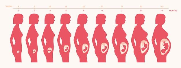 La conception des processus de grossesse