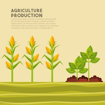 Conception de la production agricole