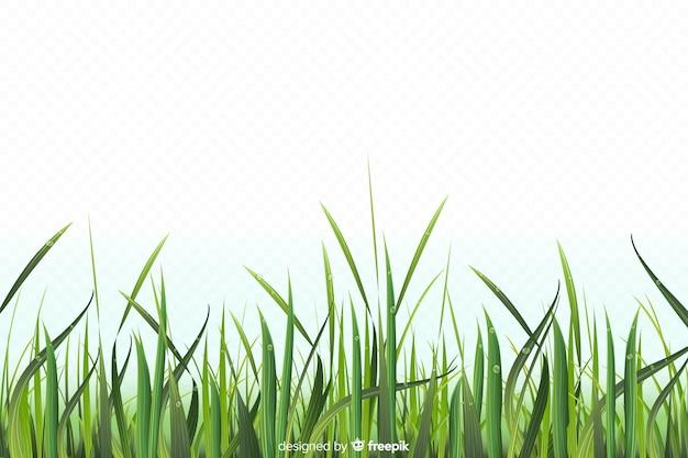 Conception réaliste de frontière d'herbe verte