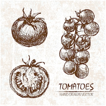 Conception de tomate tirée par la main
