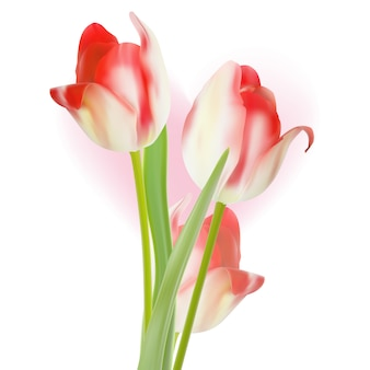 Conception De Tulipes De Modèle De Saint-valentin. Vecteur Premium