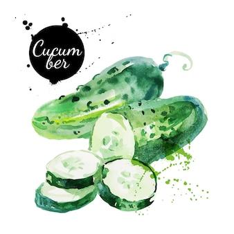 Concombre vert. peinture à l'aquarelle dessinée à la main sur fond blanc. illustration vectorielle