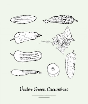 Concombres légumes isolés ensemble de vecteur d'épicerie