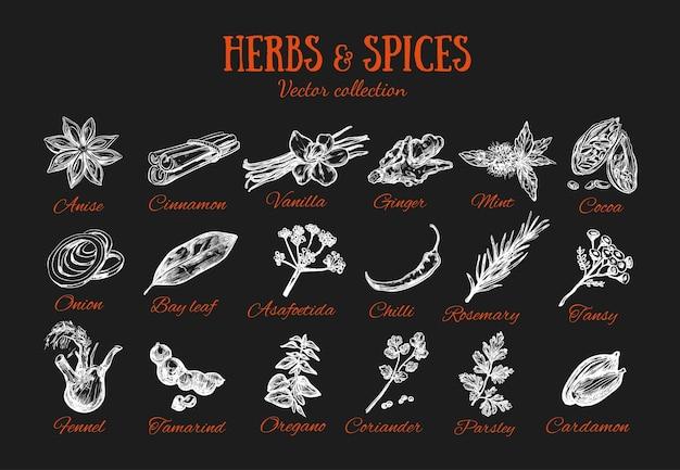 Condiments aux herbes et épices. collection sur tableau noir