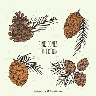 Cônes de pin collection illustration
