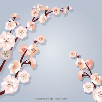 Contexte avec des branches de cerisier