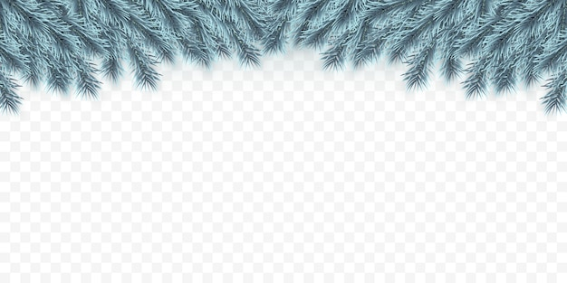 Contexte festif de noël ou du nouvel an. branches de sapin de noël bleu. contexte de vacances.
