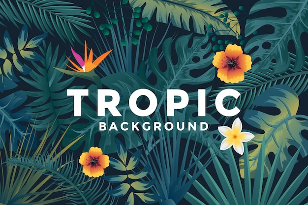 Contexte tropical