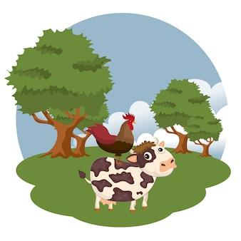 Coq debout sur une vache