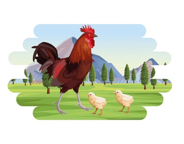 Coq d'élevage et poussins dans le paysage de montagnes de champ