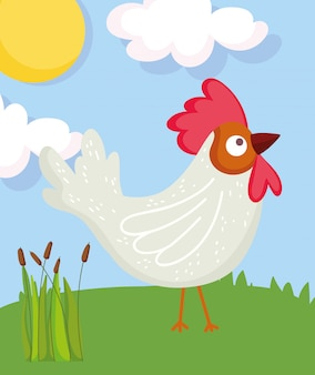 Coq oiseau herbe soleil ferme animal dessin animé illustration