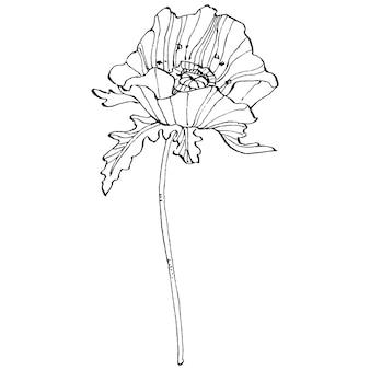 Coquelicot. fleur botanique florale.