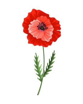 Coquelicot. pavot dessiné main aquarelle. symbole botanique isolé de la fleur de pavot rouge en fleurs. conception florale pour la décoration ou le modèle de carte de voeux de mariage de vacances.