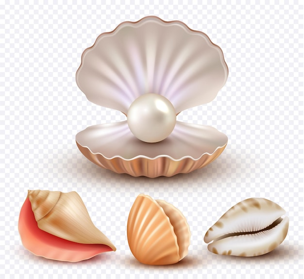 Coquillages réalistes. mollusk coquilles océan plage objets perles de luxe collection ouverte de concha.