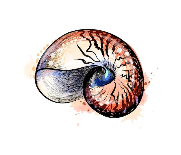 Coquille de mer d'une éclaboussure d'aquarelle, croquis dessiné à la main. illustration de peintures