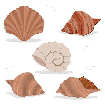 Coquilles de mer et océan de différentes formes vectorielles jeu d'icônes plat isolé