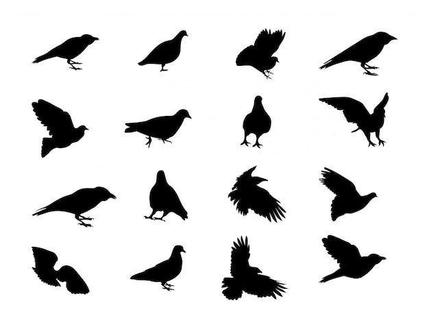 Corbeau de colombe silhouette noir et blanc. illustration