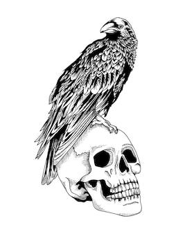 Corbeau sur un crâne humain