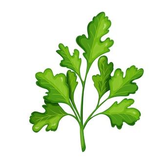 Coriandre verte, nourriture végétarienne, menu sain. épices d'herbes, salade et repas. illustration vectorielle isolée en style cartoon.