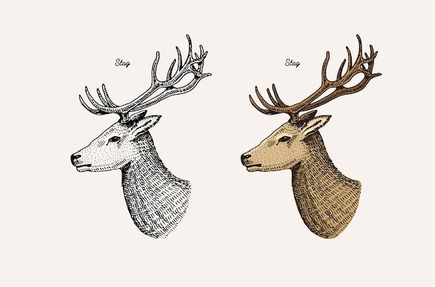 Corne et bois animaux gazelle impala et grand cerf en jachère koudou