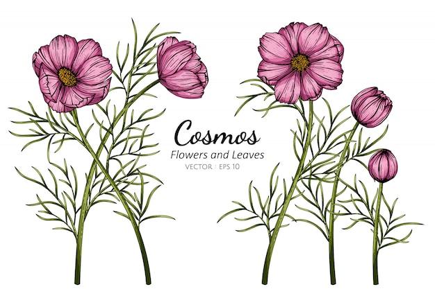 Cosmos rose fleur et feuille dessin illustration