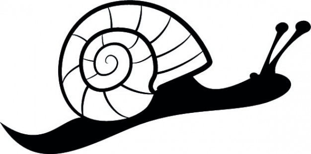 Côté de l'escargot