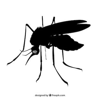 Côté de moustique