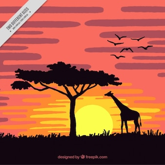 Coucher de soleil dans la savane avec une girafe