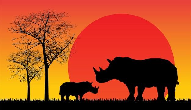 Coucher de soleil rhinocéros en afrique