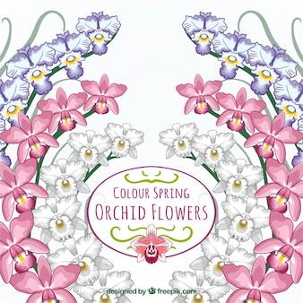 Couleur carte de fleurs d'orchidées