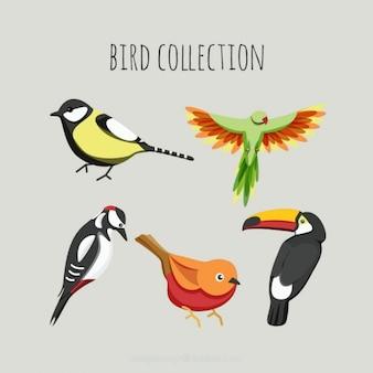 Couleurs oiseaux emballent
