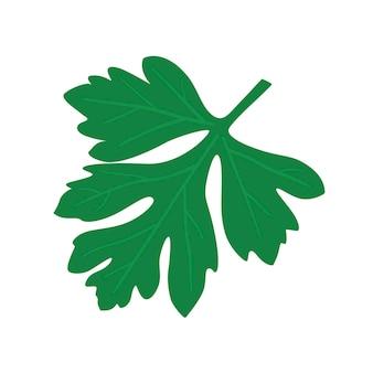 Coup de poing. feuille de persil vert.