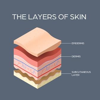 Coupe transversale de couches de peau humaine structure soins de la peau concept médical plat
