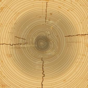 Coupe transversale du bois