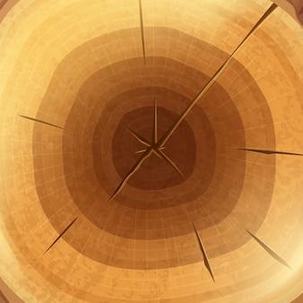 Couper la section transversale de la souche avec un fond naturel d'anneaux annuels