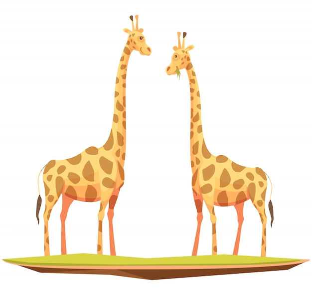 Couple de girafes