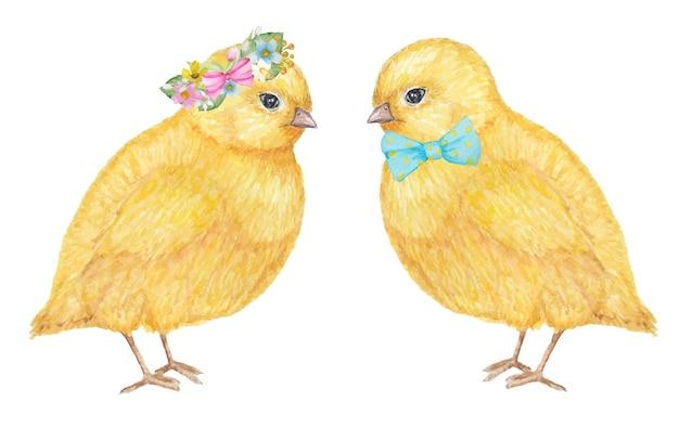 Couple de poulets jaunes dessinés à la main aquarelle.