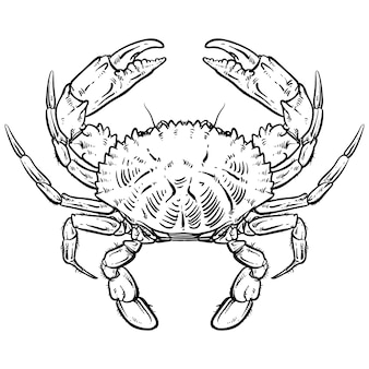 Crabe dessin sur fond blanc