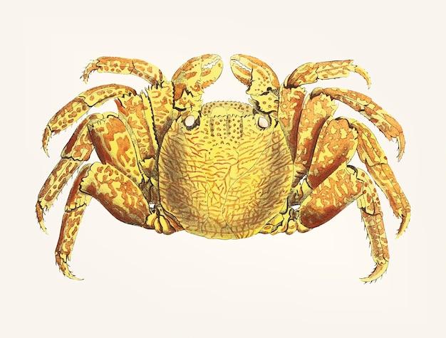 Crabe dessiné à la main