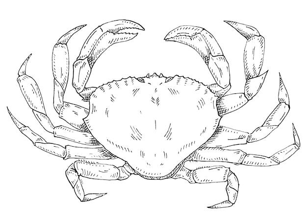 Crabe isolé sur fond blanc vintage éclosion vector illustration monochrome noir
