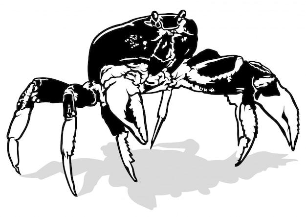 Crabe noir et blanc