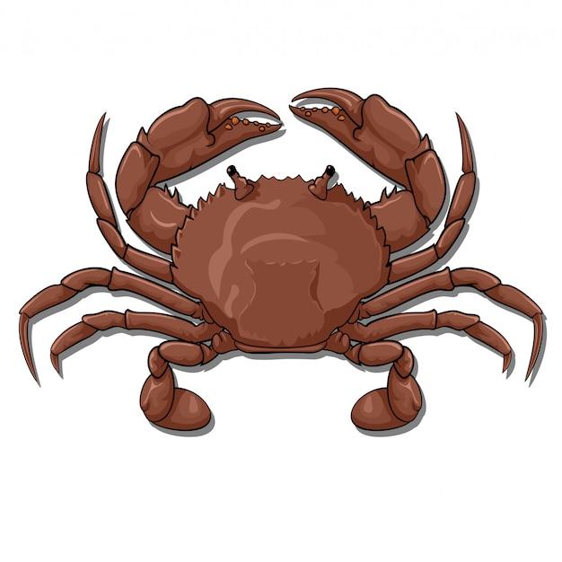 Crabe, vue de dessus