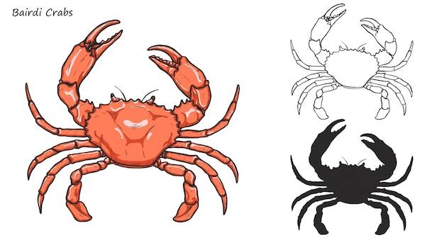 Crabes bairdi