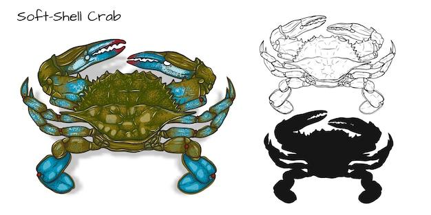 Crabes à carapace molle
