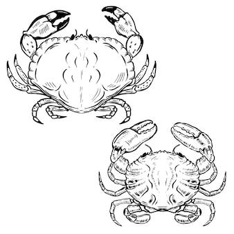 Crabes dessinés à la main sur fond blanc. éléments pour affiche, emblème, signe, menu du restaurant de fruits de mer. illustration