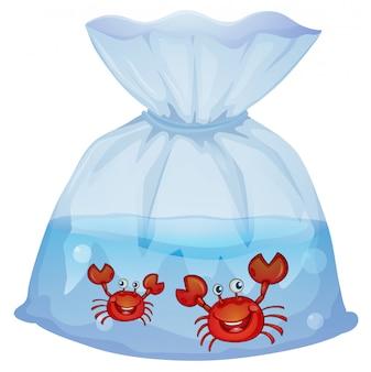 Crabes à l'intérieur du plastique