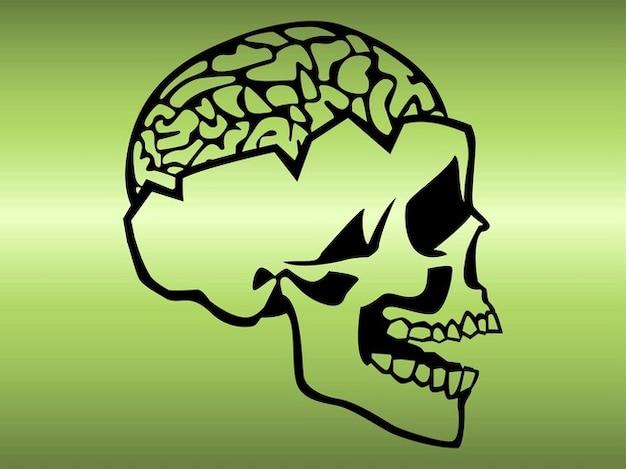 Crâne avec le cerveau exposé
