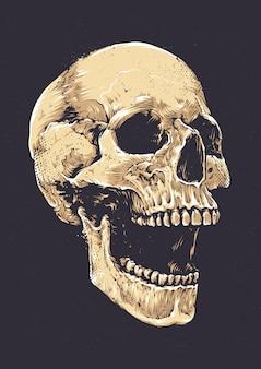 Crâne dessiné à la main